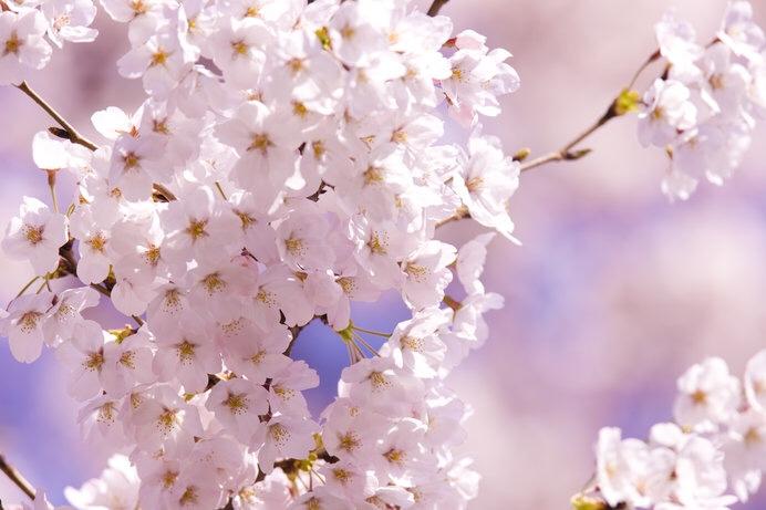 春ですね(๑•᎑•๑)